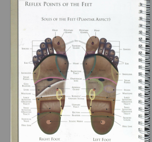 Reflex Points of the Feet