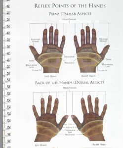 Reflex Points of the Hands